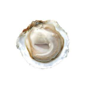 Dutch Imperial Oyster half opened with oyster meat