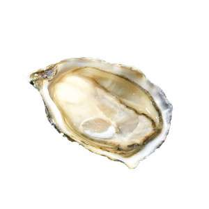 One gillardeau special oyster half opened with oyster meat