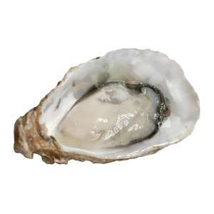 Fresh special de Claire Oyster openend including oyster meat