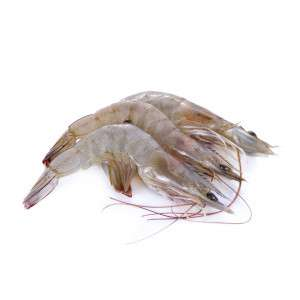 Three fresh Vannamei shrimps